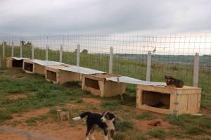 Aurinkosuojat asetettiin koirankoppien päälle, jotta koirilla olisi enemmän varjoa ja pystyisivät suojautumaan kuuman auringon säteiltä