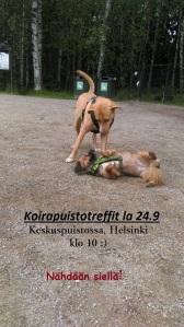 koirapuistoilu