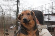 Scooby noin 2-vuotias, 16kg
