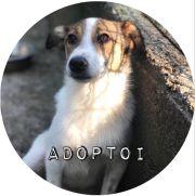 adoptoi